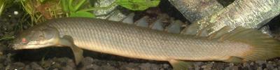 freshwatereels